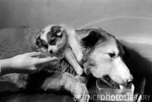 G3520405-Demikhov_s_two-headed_dog,_1967-SPL